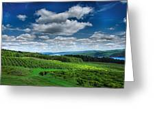 Vineyard And Lake Greeting Card by Steven Ainsworth