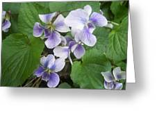 Violets 2 Greeting Card by Anna Villarreal Garbis