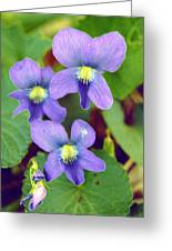 Violets Greeting Card by Jame Hayes
