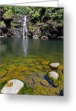Waimea Falls Greeting Card by Elizabeth Hoskinson