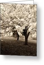 Waiting For Sunday - Holmdel Park Greeting Card by Angie Tirado