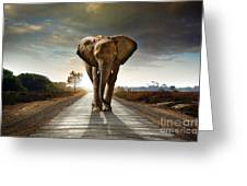 Walking Elephant Greeting Card by Carlos Caetano