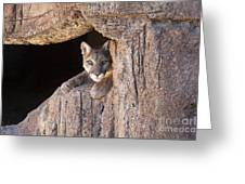 Watchful Eyes Greeting Card by Sandra Bronstein