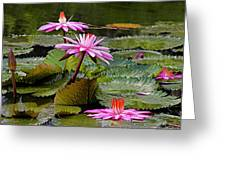 Water Lillies-st Lucia Greeting Card by Chester Williams