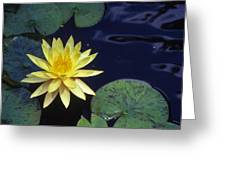 Water Lilly - 1 Greeting Card by Randy Muir