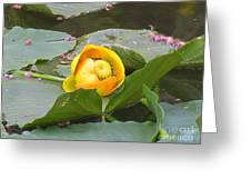 Water Lilly Greeting Card by Diane  Greco-Lesser