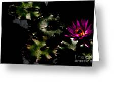 Water Lily At Dusk Greeting Card by Venetta Archer