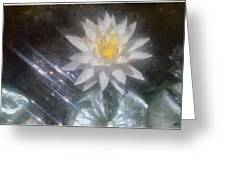 Water Lily In Sunlight Greeting Card by Jeff Kolker
