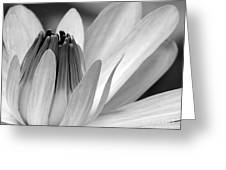 Water Lily Opening Greeting Card by Sabrina L Ryan