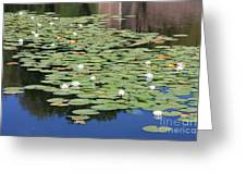 Water Lily Pond Greeting Card by Carol Groenen