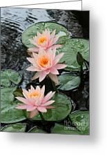 Water Lily Trio Greeting Card by Sabrina L Ryan