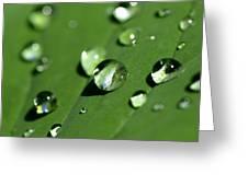 Waterdrops Greeting Card by Melanie Viola