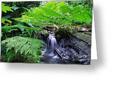 Waterfall And Tree Fern Greeting Card by Thomas R Fletcher