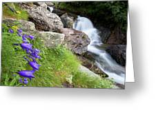 Waterfalls And Bluebells Greeting Card by Mircea Costina Photography