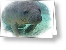 West Indian Manatee Greeting Card by Larry Linton