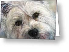 Westie Greeting Card by Linnell Esler