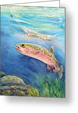 Westslope Cutthroat Greeting Card by Gale Cochran-Smith