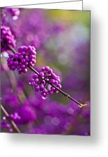 Wet Purple 2 Greeting Card by Mike Reid