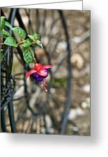 Wheel And Fushia Blossom Greeting Card by Douglas Barnett