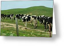 When The Cows Come Home Greeting Card by Wingsdomain Art and Photography
