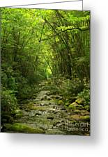 Where It Leads Greeting Card by M J Glisson