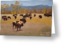 Where The Buffalo Roam Greeting Card by Tate Hamilton