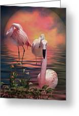 Where The Wild Flamingo Grow Greeting Card by Carol Cavalaris