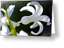 White Bell Greeting Card by Svetlana Sewell