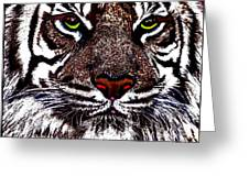 White Bengal Greeting Card by Wbk