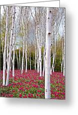 White Birch Trees With A Red Flowers Carpet Greeting Card by Katarzyna Drabek