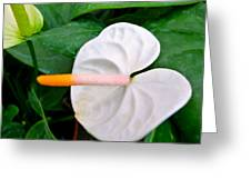 White Flamingo Flower Greeting Card by Lanjee Chee