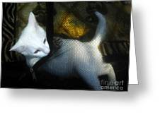 White Kitten Greeting Card by David Lee Thompson