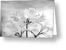 White Lillies Greeting Card by Marsha Heiken