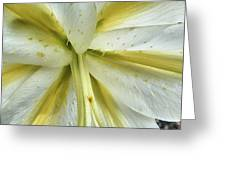 White Lily Greeting Card by Beth Akerman