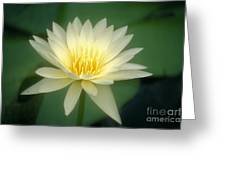 White Lily Greeting Card by Ron Dahlquist - Printscapes