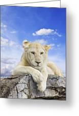 White Lion Greeting Card by Anek Suwannaphoom