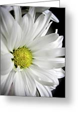 White Petals Greeting Card by Julie Palencia
