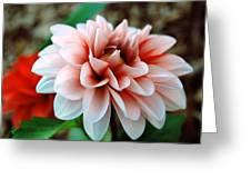 White Red Flower Greeting Card by Jame Hayes