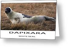 White Seal  Greeting Card by Dapixara Art