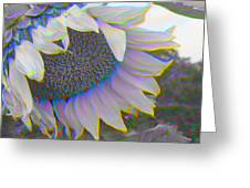 White Sunflower Greeting Card by Vicky Brago-Mitchell
