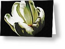 White Tulip Greeting Card by Sarah Loft