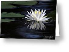 White Water Lily Greeting Card by Sabrina L Ryan