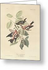White Winged Crossbill Greeting Card by John James Audubon