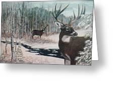 Whitetail Deer Greeting Card by Ben Kiger
