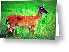 Whitetailed Deer Greeting Card by Susie Weaver