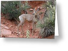 Wild And Pretty - Garden Of The Gods Colorado Springs Greeting Card by Christine Till