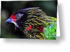 Wild Bird Greeting Card by David Lee Thompson