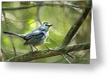 Wild Birds - Gray Catbird Greeting Card by Christina Rollo