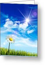 Wild Daisy In The Grass Against Bleu Sky Greeting Card by Sandra Cunningham