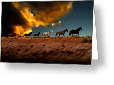 Wild Horses At Sunset Greeting Card by Harry Spitz